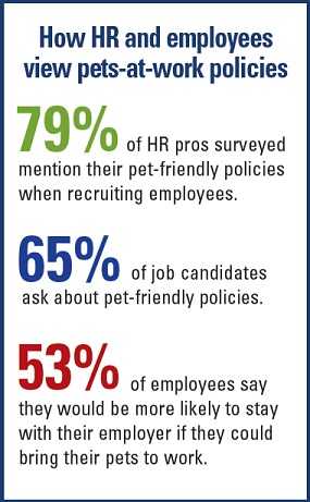 How HR and employees view pets-at-work policies