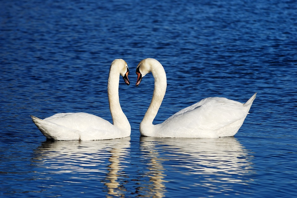 Hire SWANS and let them swim