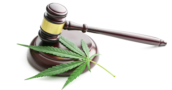 Marijuana laws present challenges for employers